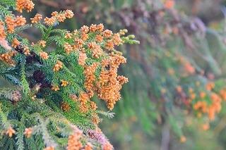 の 花粉 情報 今年